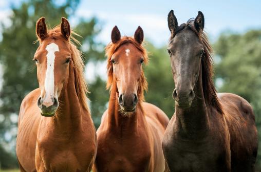 3-horses-509FT