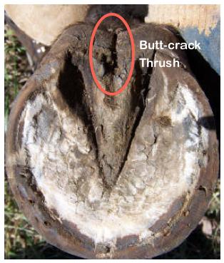 frog-thrush