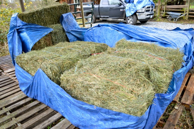 Storing Hay So It Never Gets Moldy Listen To Your Horse