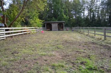 grass-paddock