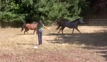 lighter-lunging