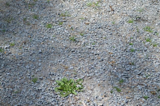 gravel-May