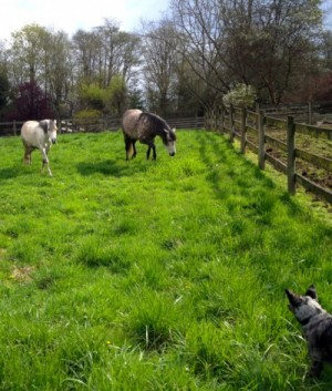 grass-horses-tiah