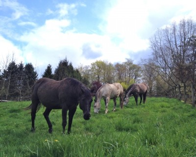 vitE-lush-pasture
