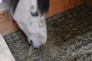 slow feeder hay