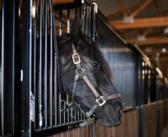 black-horse-stallDT.jpg