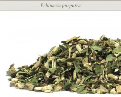 echinacea-mr-herbs