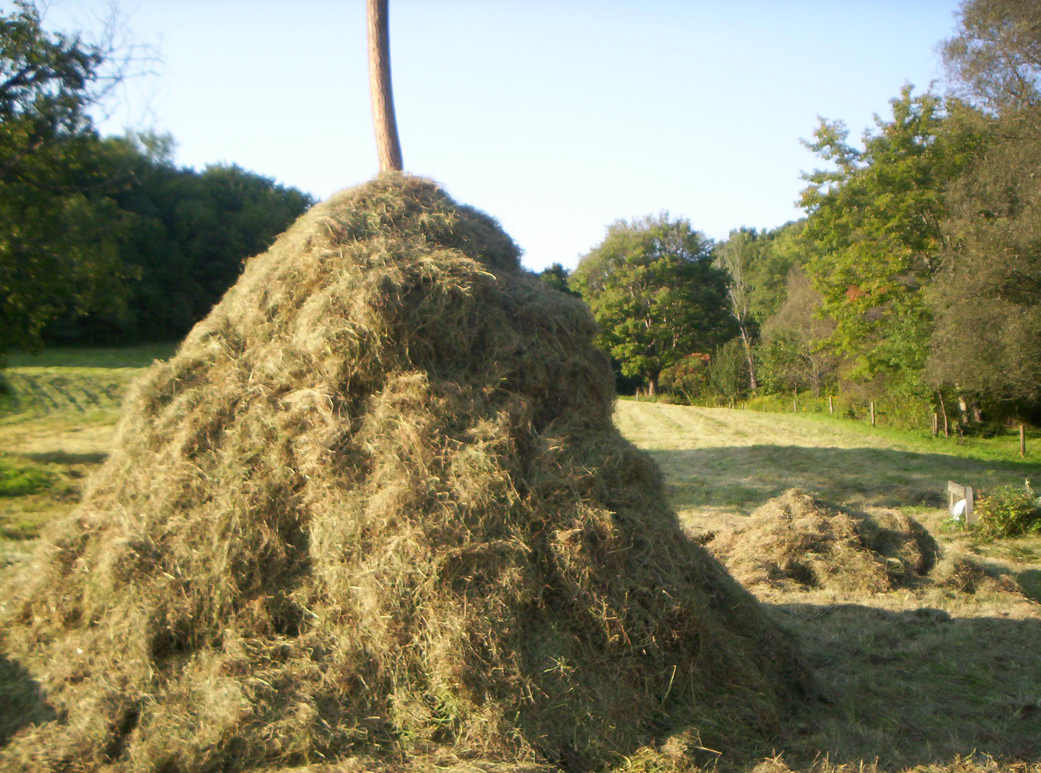 how to tell if hay is moldy