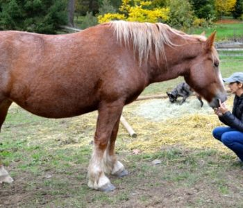 VIDEO: Manipulating Your Horse – Making Your Idea His Idea