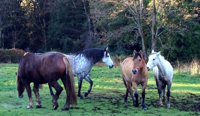 jinis-herd