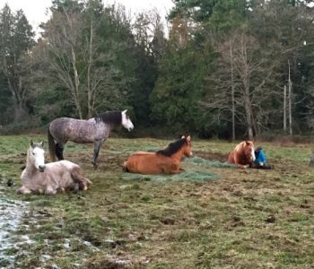 Lying Down with Horses