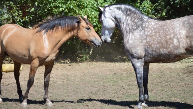 courtship-greet