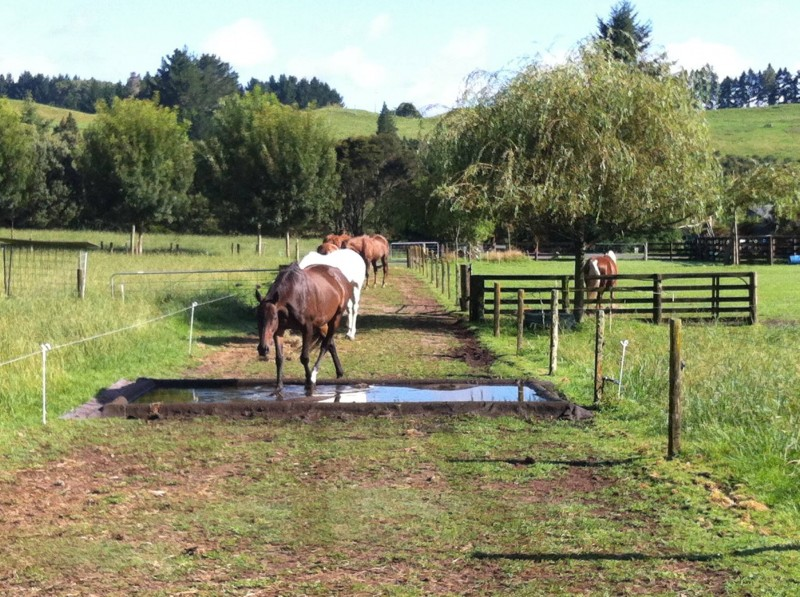 How To Make A Great Waterhole For Your Paddock Paradise Or