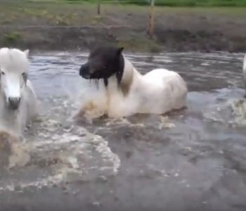 VIDEO: How To Make a Great Waterhole for Your Paddock Paradise or Pasture
