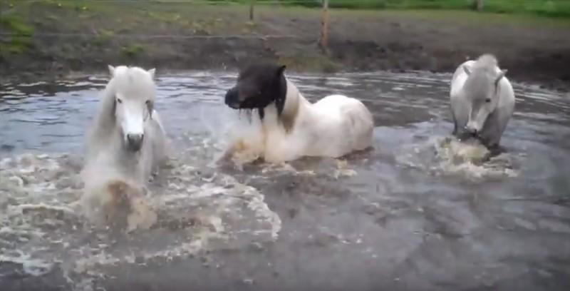 icelandic-waterhole-play