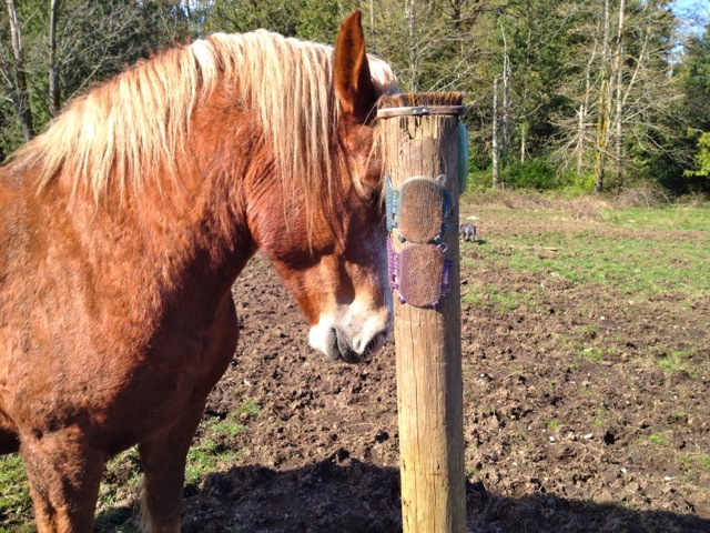 Affordable Diy Equine Scratching Post Solutions Listen
