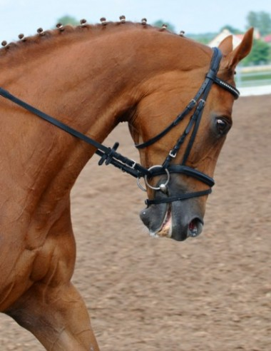 bridle-painDT