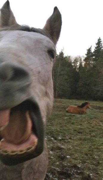 jax-yawn2