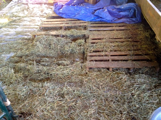 wasted-hay