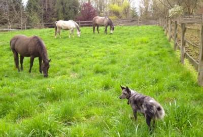 zorra-spoo-molly-grazing-tiah