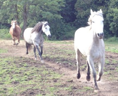 3 of my herd