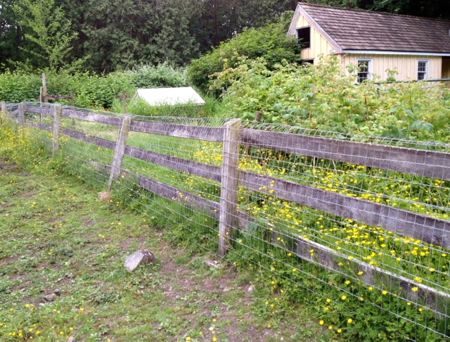 mesh-lawn-fence