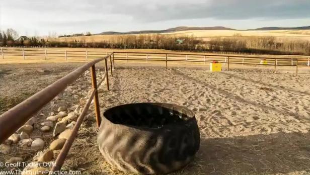 Pipe Fencing (c) Geoff Tucker DVM