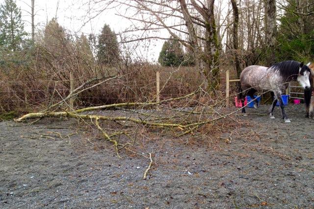 tree-fall-paddock