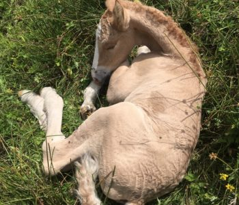 Newborn Foal Reveals His Name