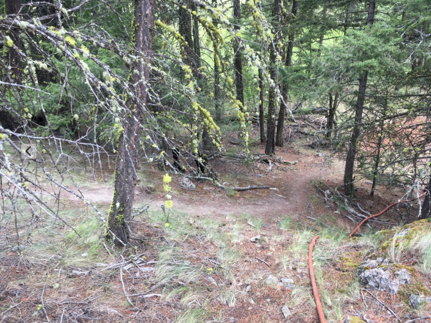 Trail to the outhouse at Equinisity