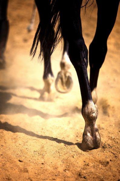 horse-legsDT