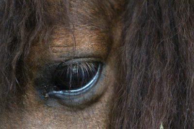 horse-eyedt