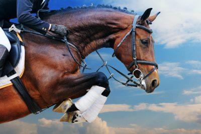 horse-jumpdt