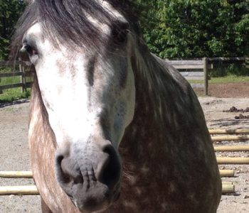 Is Your Horse Food-Focused AKA Treat Crazy?