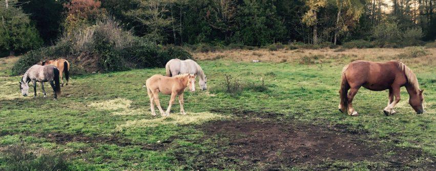 herd-field