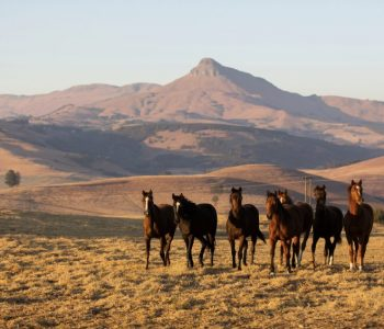 The Empowered Mustang Project  – The Journey Home