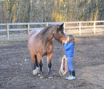 The Downside & Challenges of Equine-Assisted Therapy