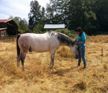 Audio: What Are the Rights of a Working Animal?
