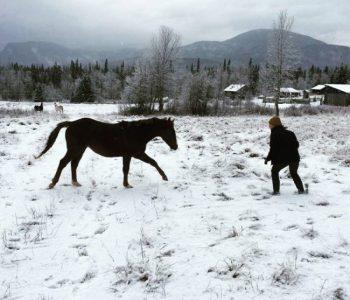 Rewilding the Herd – Chop Wood, Carry Water