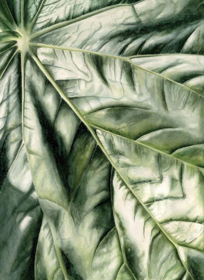 Begonia fusca by Amy Dadachanji