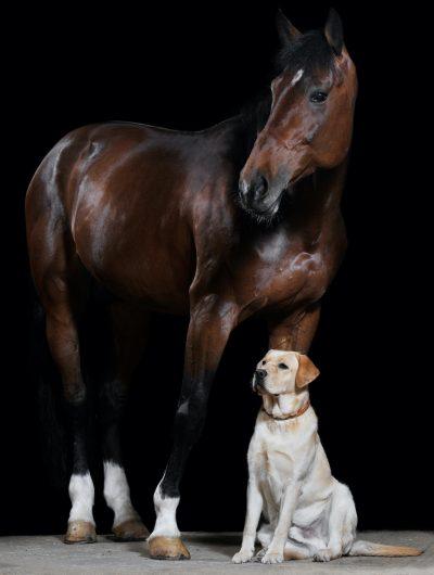 dog-horsedt