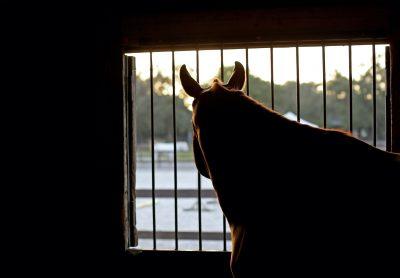 horse-jaildt