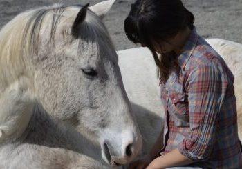 When Horses Teach Mindfulness – It Sticks