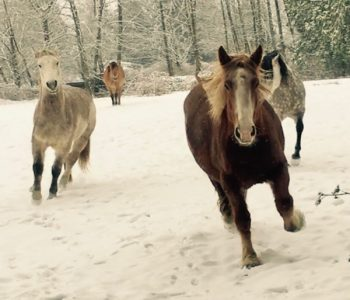 Snow Ponies + New Music!