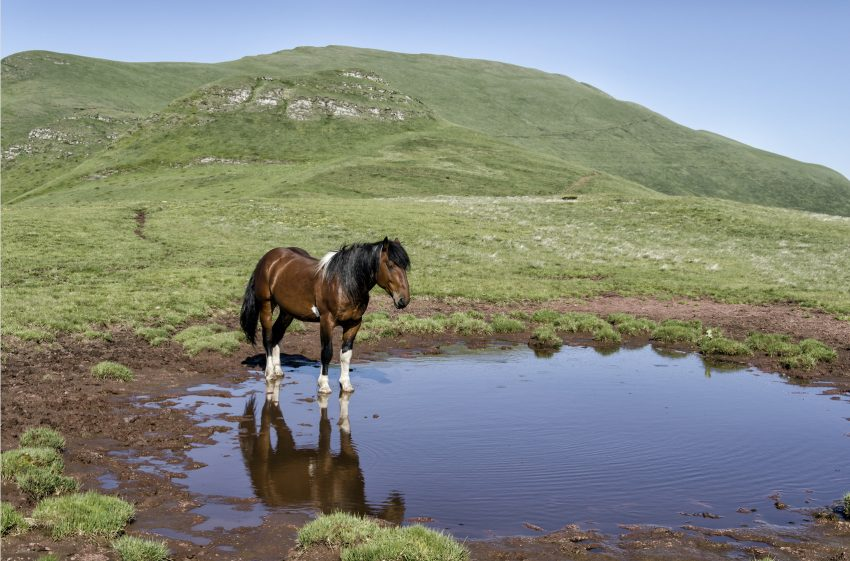 waterhole-horsedt