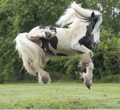 creative ways to make your own horse jumps listen to your horse