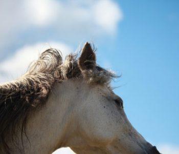 Rewilding the Herd – Spring Vignettes