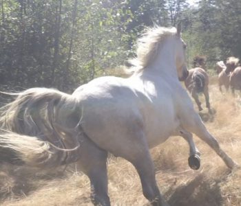 Animal Communication: HOW Do I Listen to My Horses?