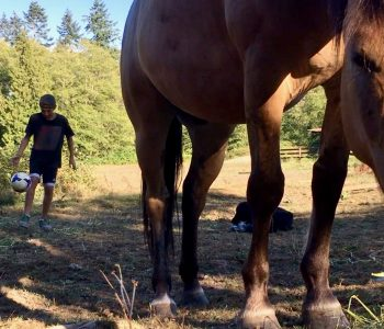 Freestyle Football – With Horses!